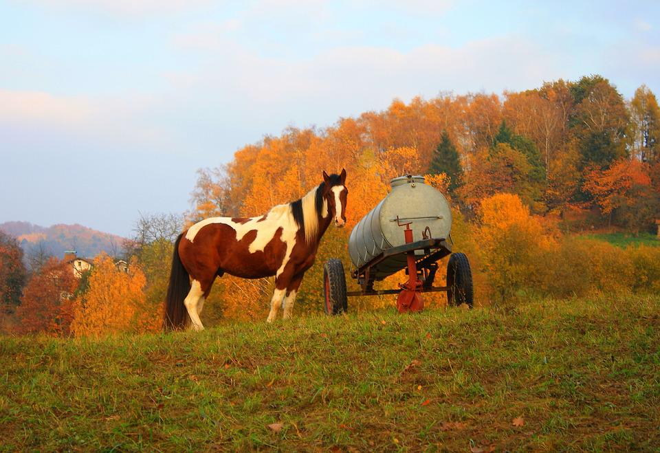 Horse, Coupling, Pasture, Nature, Ride, Animal