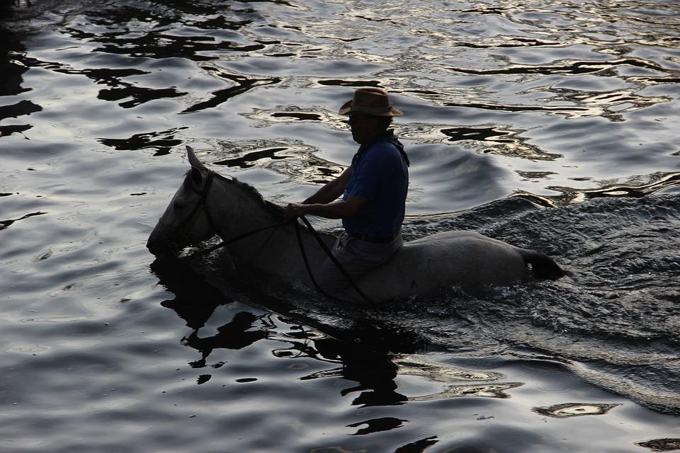 Horse, Water, The Ride, Nature, Animal, Animals