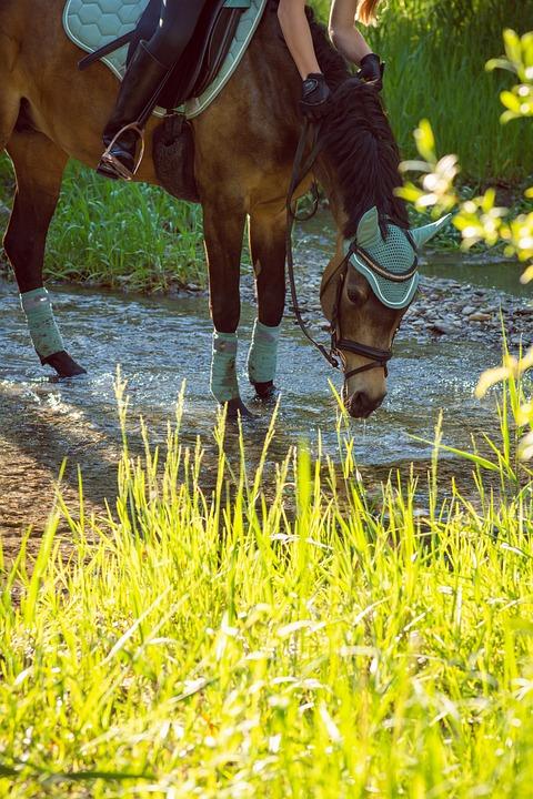 Horse, Pony, Mare, Mammal, Bach, Water, Nature, Hobby