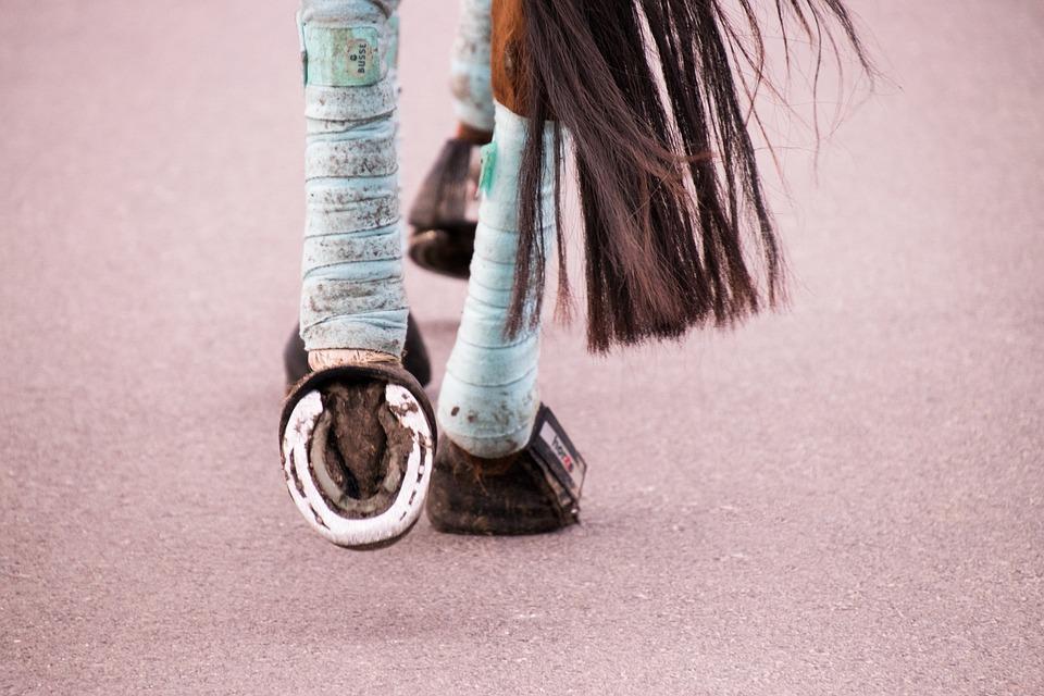 Bandages, Hoof, Horse