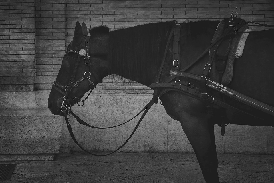 Black And White, Horse, Animal