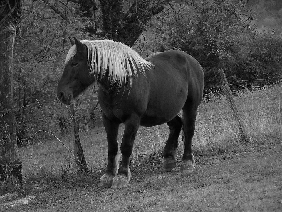 Horse, Prairie, Boulogne