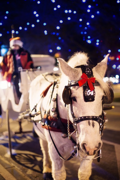 Horse Carriage, Horse, Christmas, Winter, Snowing, Xmas