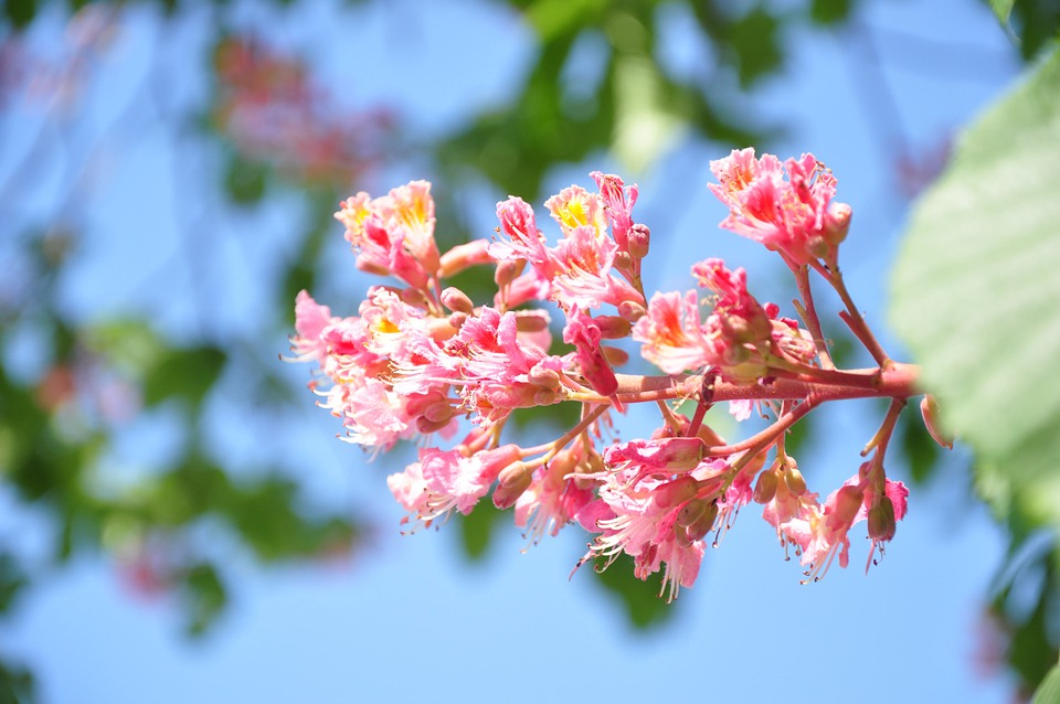 Free Photo Horse Chestnut Green Pink Blue Max Pixel