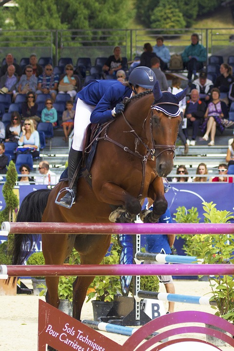 Horse, Jump, Contest, Equestrian, Obstacle, Sport