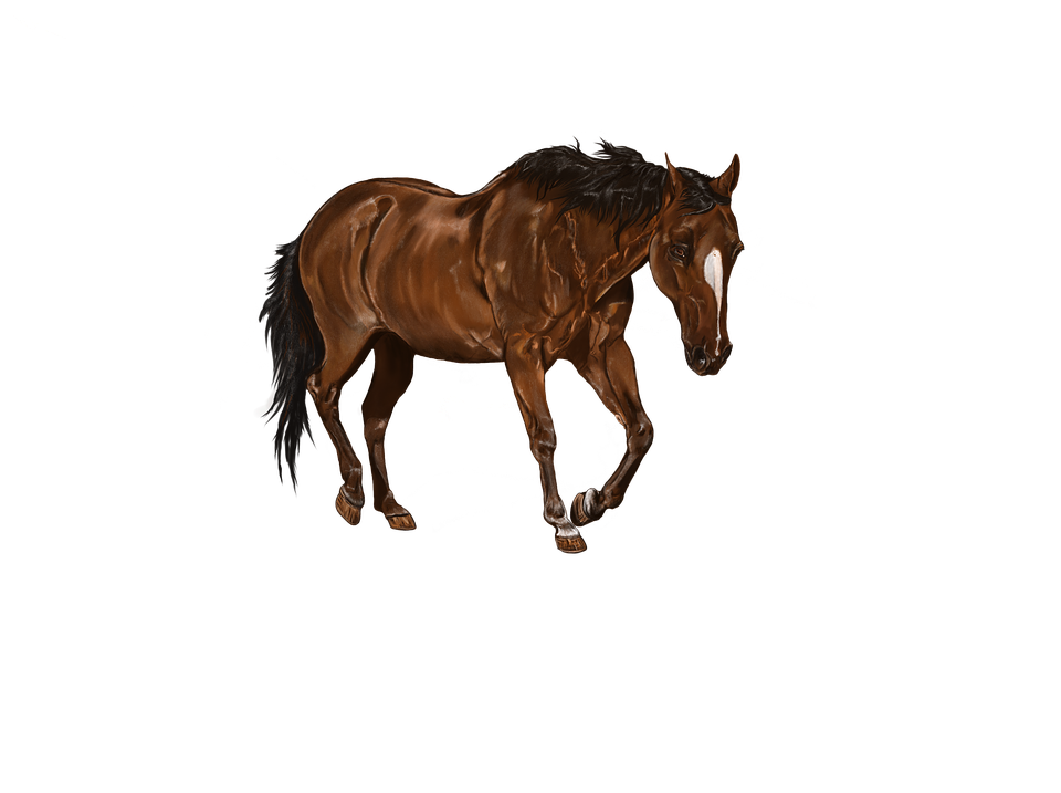 Digital Artwork, Horse, Art, Bay, Animal, Digital