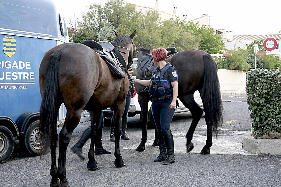 Horse, Horseback Riding, Equestrian, Horses, Mane