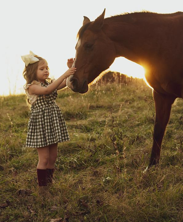 Horse, Sunset, Girl And Horse, Equestrian, Fall