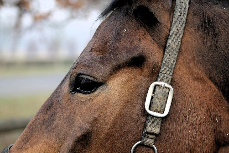 Horse, Eye, Animals