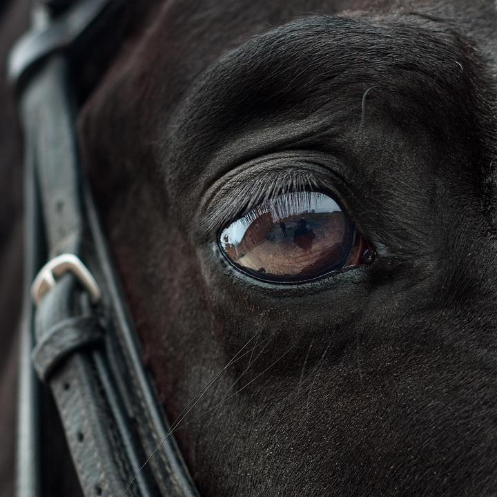 Horse, Eye, Mirror, Reflection, Close Up