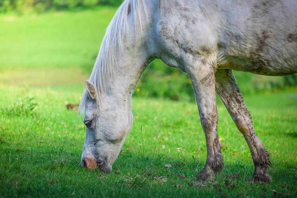 Animal, Horse, Eat, Environment, Farm, Feeding, Field