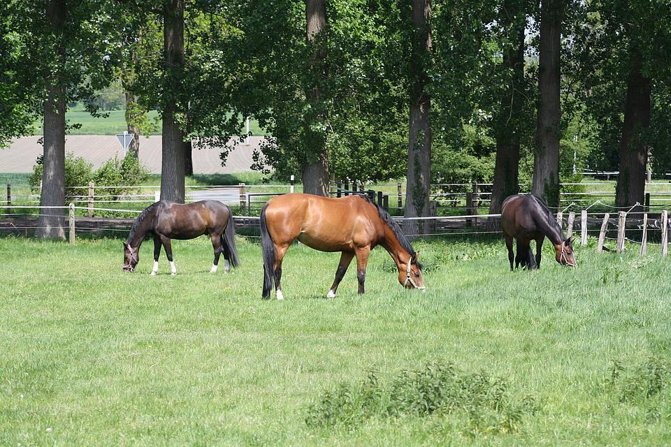 Horse, Grass, Pasture, Brown, Horse Group