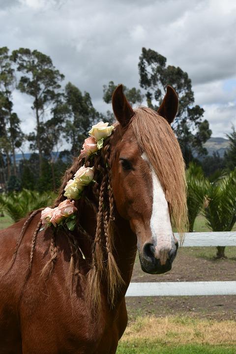 Roses, Horse, Nature, Explore, Green, Hair, Magic