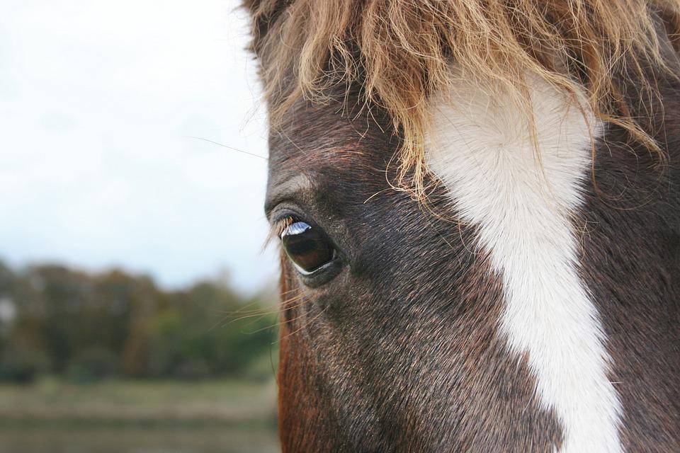 Horse, Horse Head, Eye, Snout, Animal Portrait, Mane