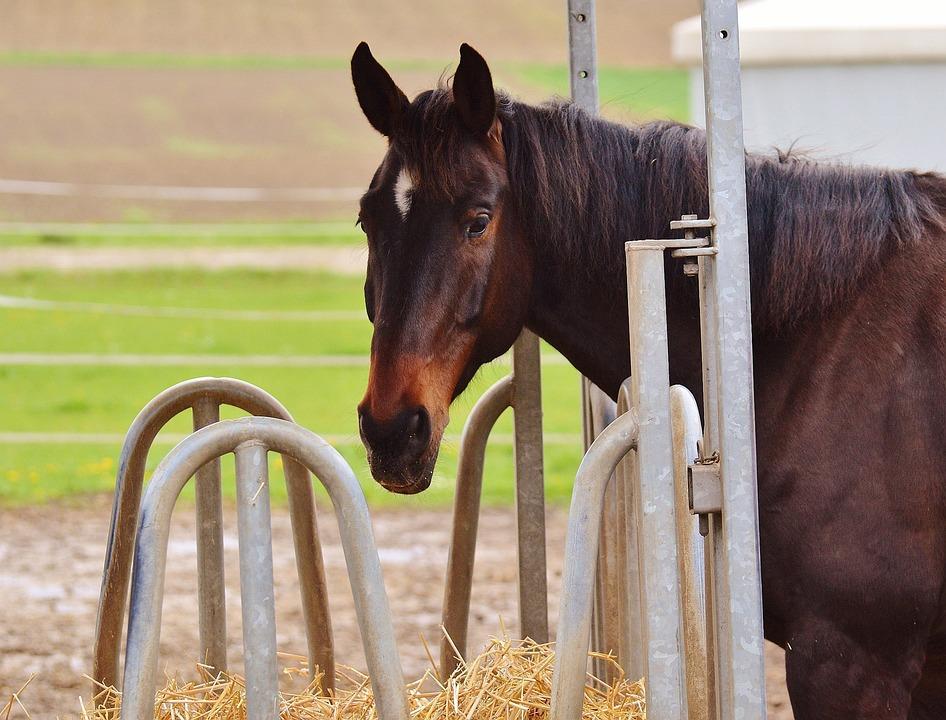 Horse, Brown, Horse Head, Animal, Nature, Animal World