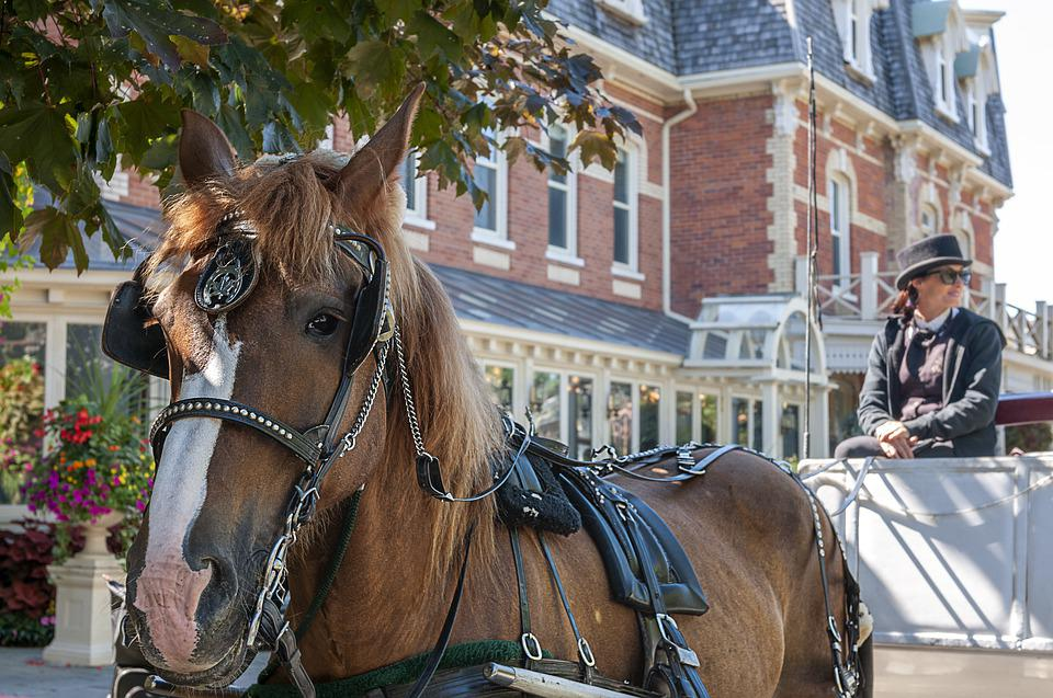 Horse Drawn Carriage, Horse Head, Lifestyle, Outdoors