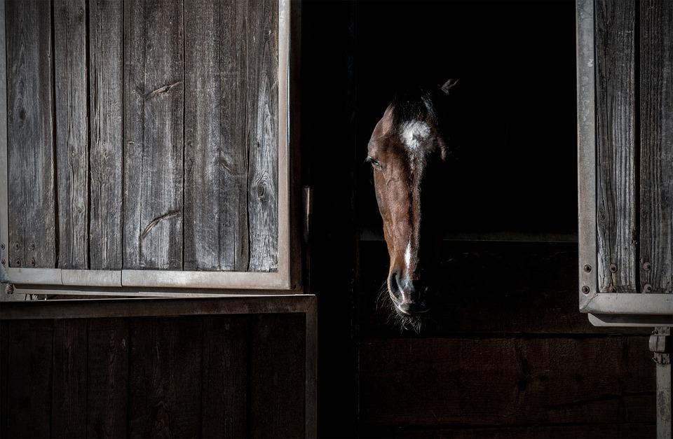 Horse, Portrait, Box, Stall, Head, Animal, Dark