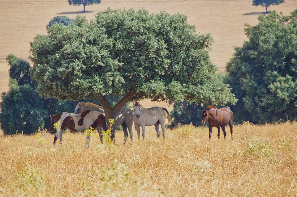 Horse, Herd, Grass, Livestock, Horseback Riding