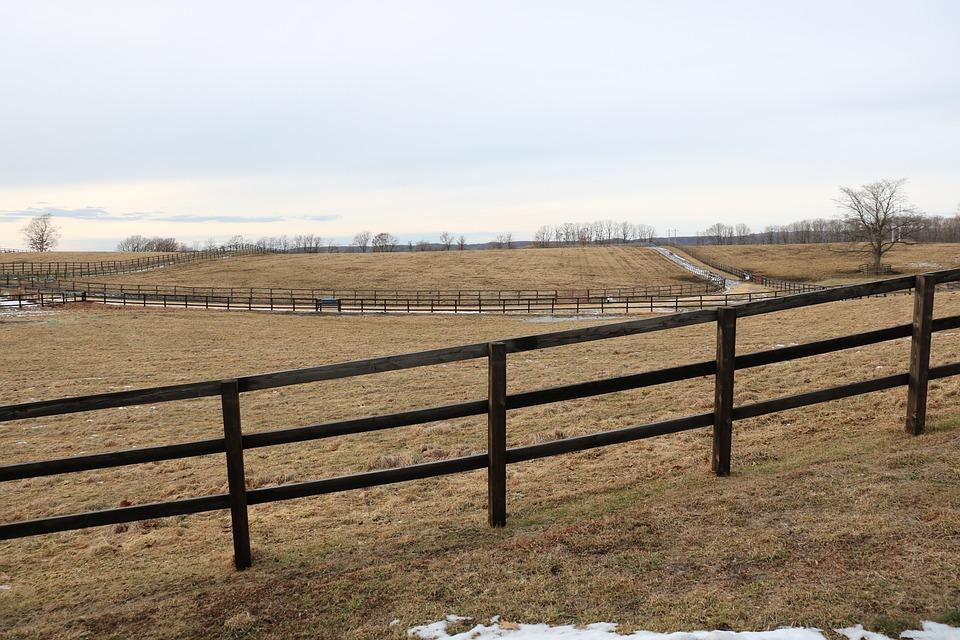 Hokkaido, Horse, Farm