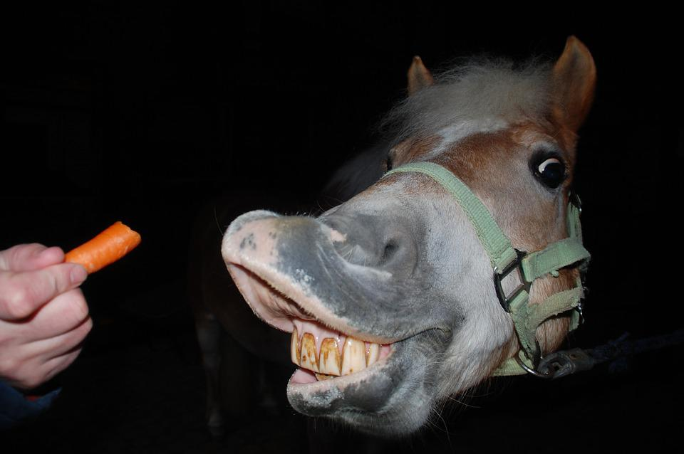 Horse, Carrot, Reward, Stretch, Horse Teeth, Horse Head