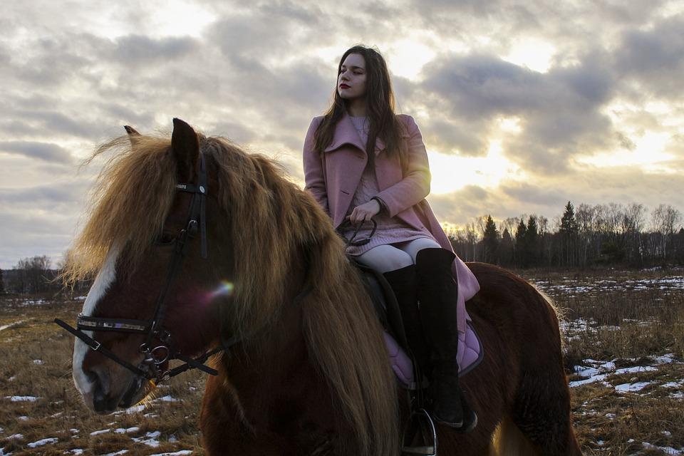 Horse, Horses, Pony, Sports, Horse Riding, Horse Stable
