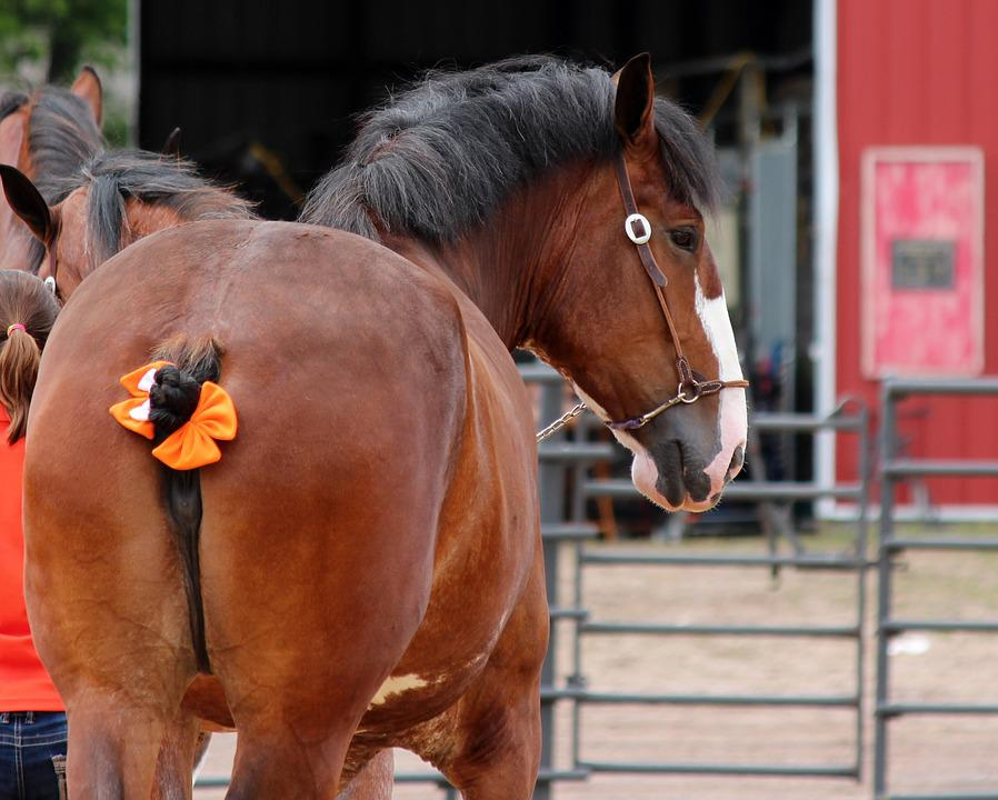 Horse, Draft, Animal, Mammal, Horses, Equine