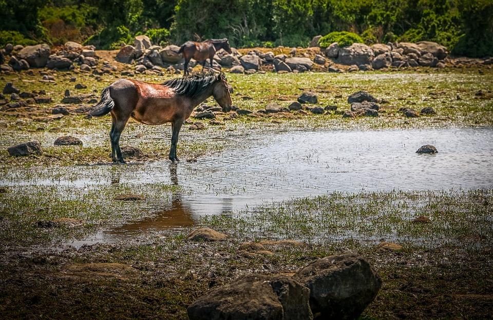 Sardinia, The National Park, Horse, Horses, Wild Horses