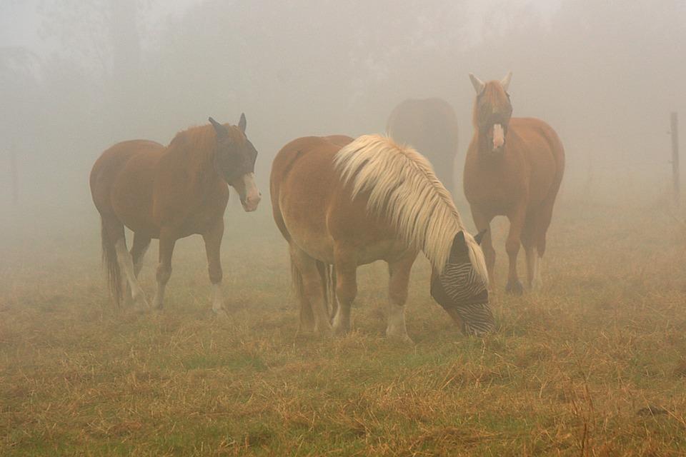 Horses, Horse In Mist, Fog, Pasture, Autumn, Landscape