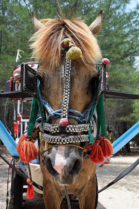 Indonesia, Travel, Gili Islands, Horse, Coach