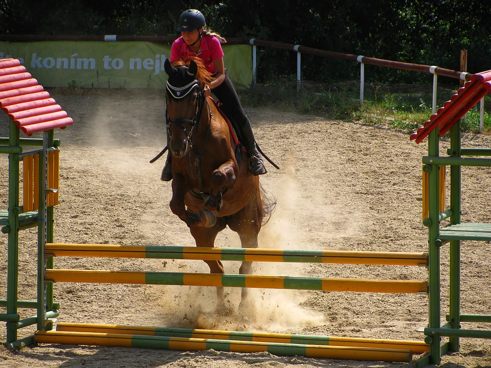 Horse, Horse Riding, Jumping, Parcours, Sports
