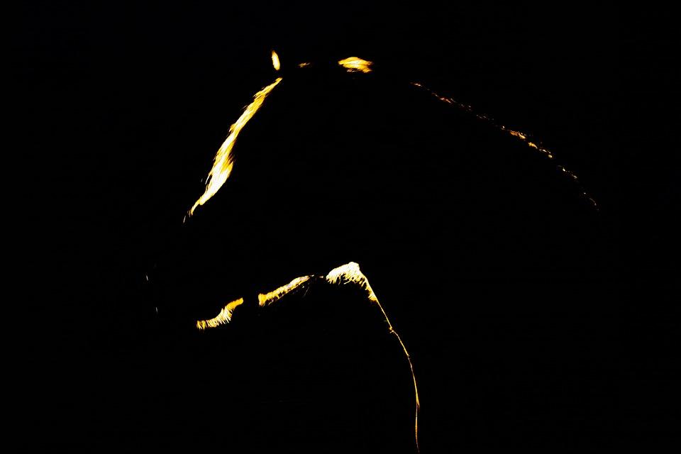 Night, Dark, Horse, Black, Spooky, Mysterious, Light