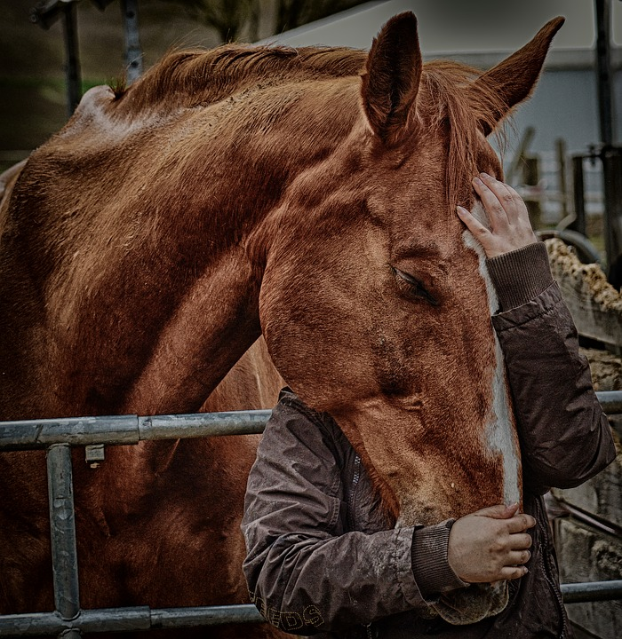 Love For Animals, Friendship, Horse Love, Connectedness