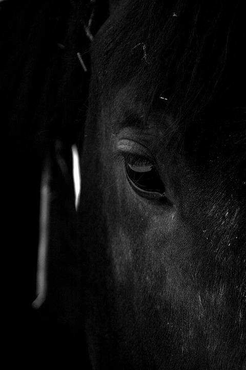 Horse, Stallion, Animal, Nature, Ride, Mane, Rural