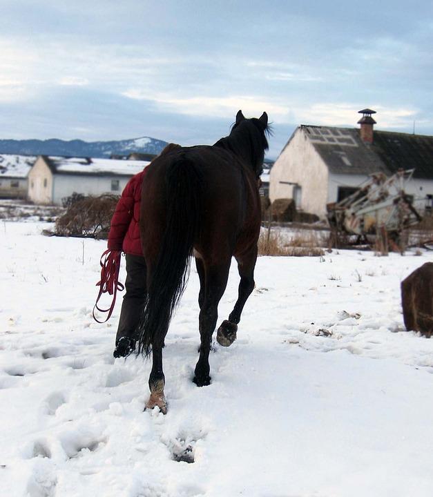 Horse, Mare, Stallion, Portrait, A Walk