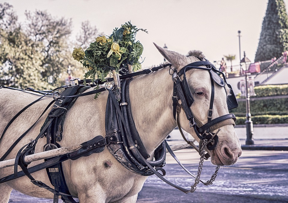 Horse, Reins, White, Horse Carriage, Animal, Mare