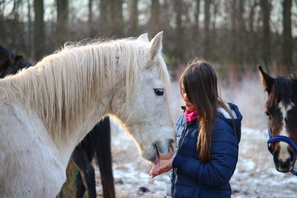Horse, Mold, Winter, Mane, Girl, Friendship