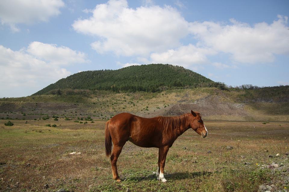 Horse, Ascension, Cloud, Mountain, Sky, Landscape