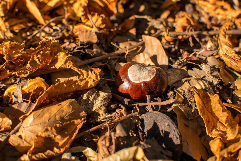 Seasonal, Fruit, Color, Autumn, Horse, Plant, Organic