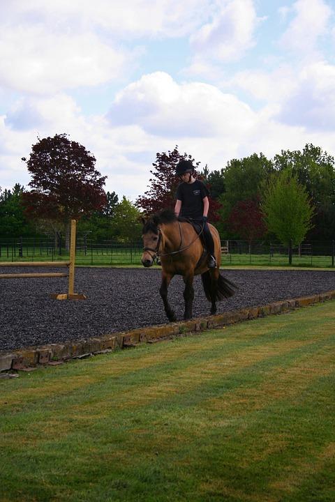 Horse, Riding, Animal, Cowboy, Horseback, Outdoors