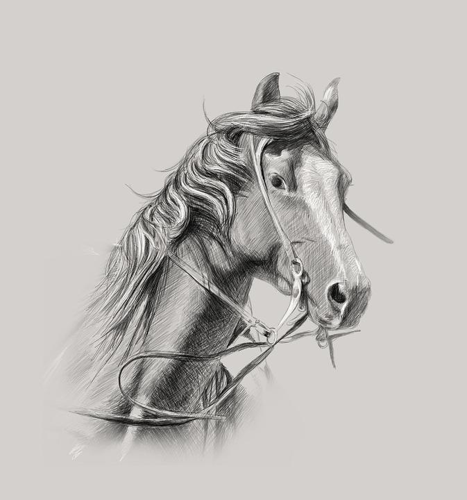 Horse, Wall Decor, Custom Portrait, Pencil Art