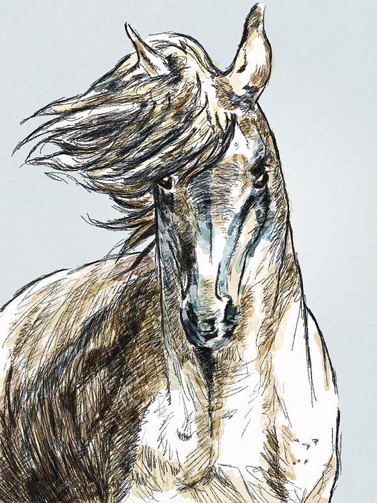 Horse, Portrait, Animal