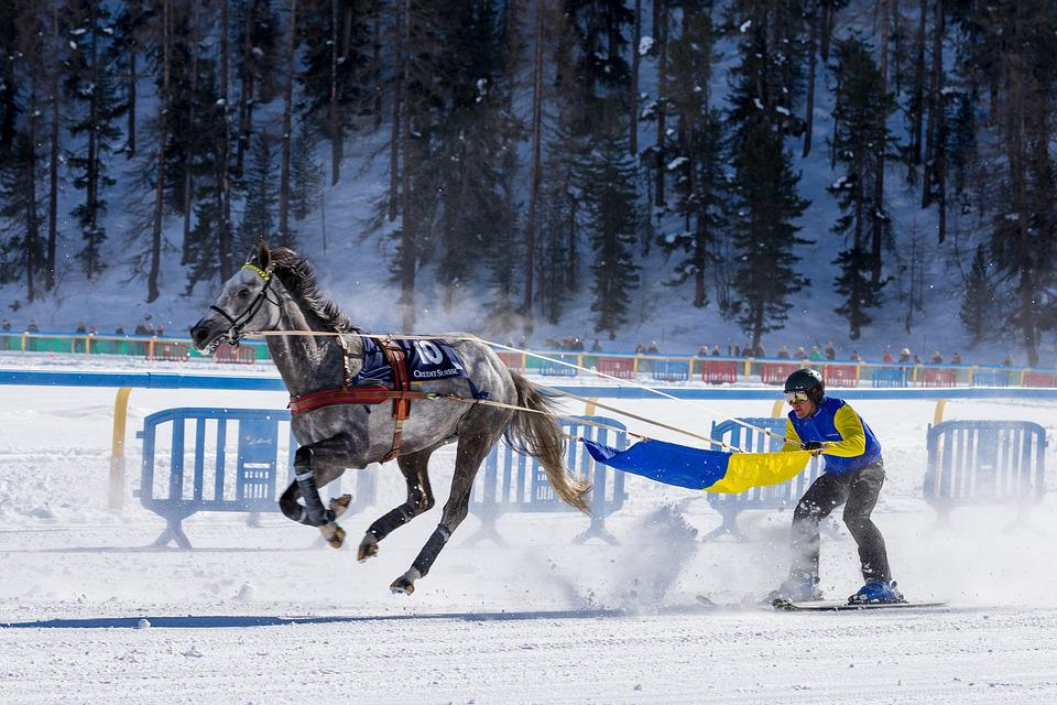 White Turf, Horse Racing, Ice, Gefrohren, Cold