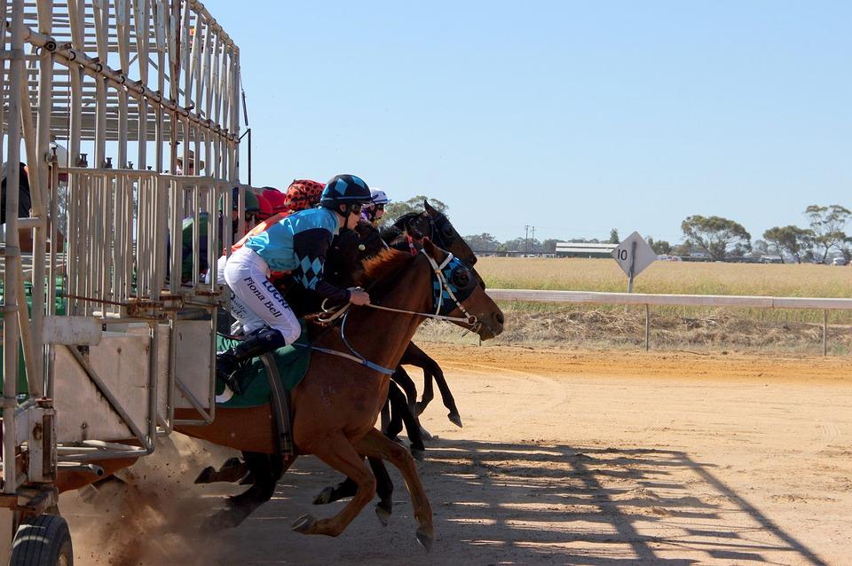 Horse Racing, Barrier, Jump