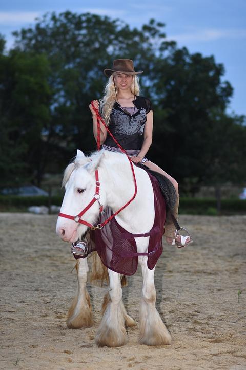 Horse, Ranch, Riding, Nature, Animal, Farm, Stallion
