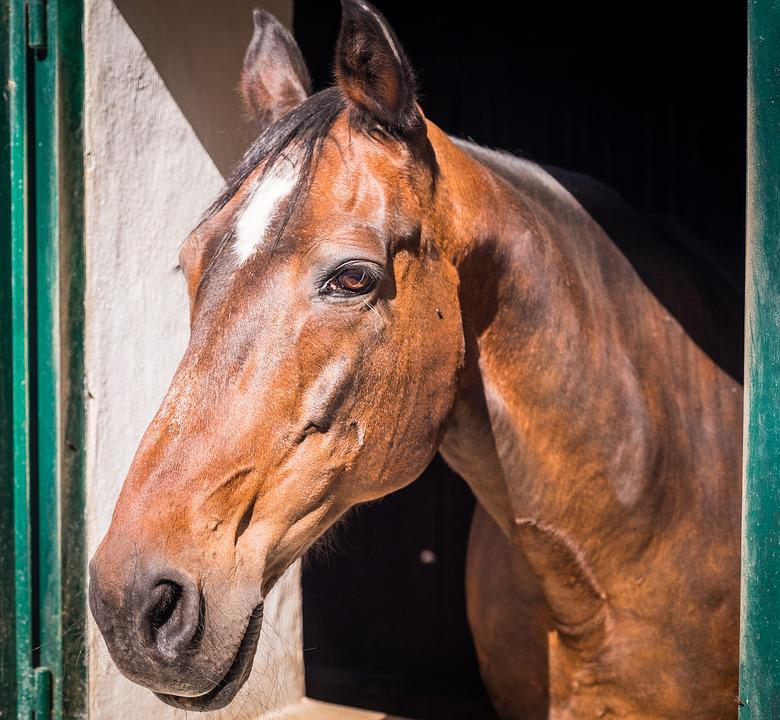 Horse, Stall, Horse Head, Reiterhof, Brown, Black