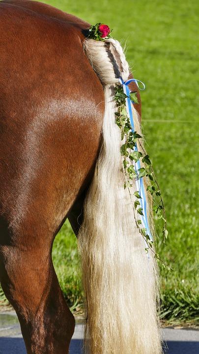 Horse, Animal, Nature, Ride, Mane, Brown, Farm