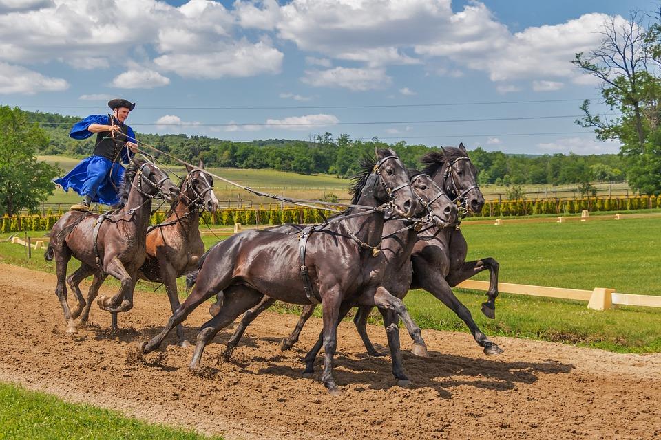 Horses, Horse, Animal, Tradition, Rider, Hungarian