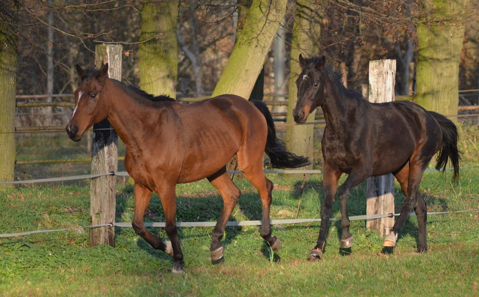 Horses, Animal, Horse Riding