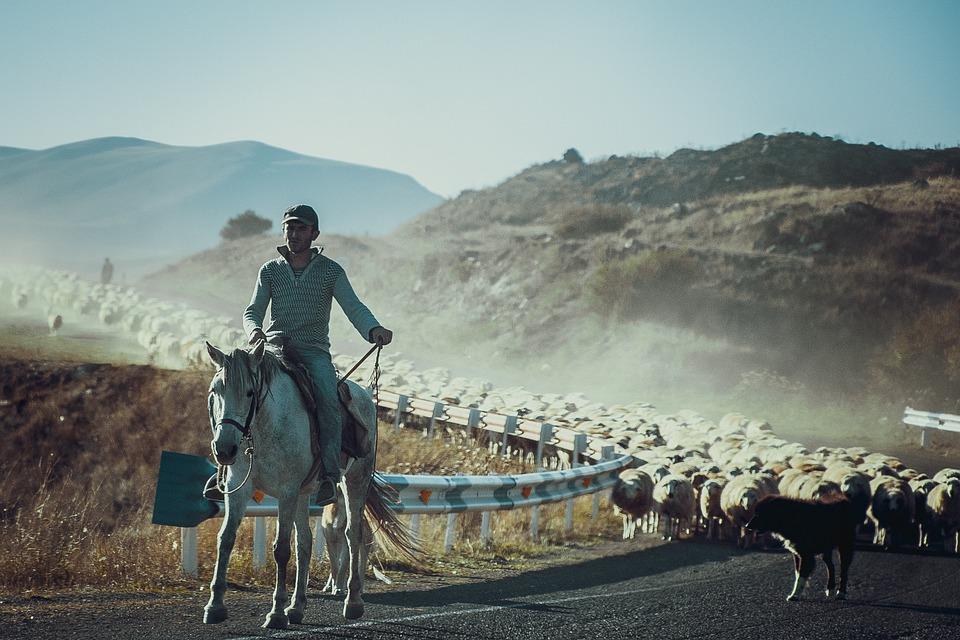 Shepherd, Horse, Road, Sheep, Mountains, Nature