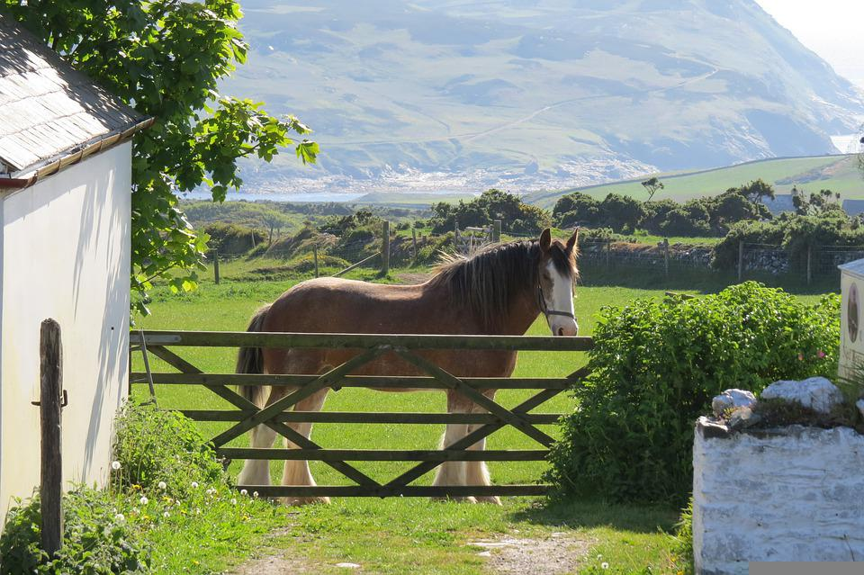 Horse, Shire Horse, Animal, Heavy Horse, Isle Of Man